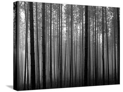 Fog and Pines III-John Bartosik-Stretched Canvas Print