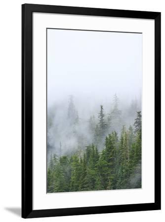 Fog and Spruce Trees near Pybus Bay, Inside Passage, Alaska, USA-Stuart Westmorland-Framed Photographic Print
