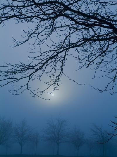 Fog and Tree Silhouette in Morning-James Shive-Photographic Print