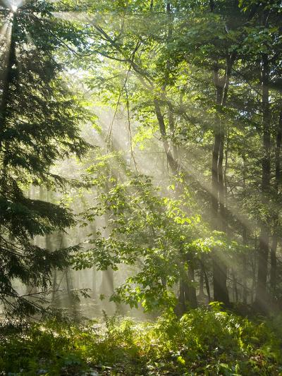 Fog Glowing Thru Trees in Pennsylvania after Rain Storm-James Shive-Photographic Print