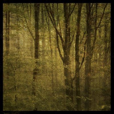 https://imgc.artprintimages.com/img/print/fog-in-mountain-trees-no-2_u-l-f3poh30.jpg?p=0