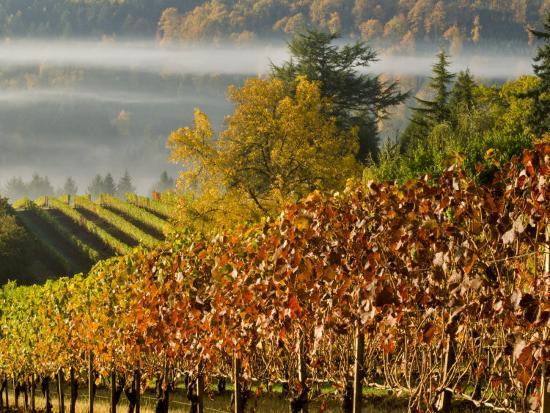 Fog Pools in a Finger of the Willamette Valley, Oregon, USA-Janis Miglavs-Photographic Print