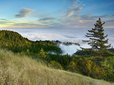 Fog Rolling over the Lower Hills at Mt. Tamalpais On A Late Spring Evening, California, USA-Patrick Smith-Photographic Print