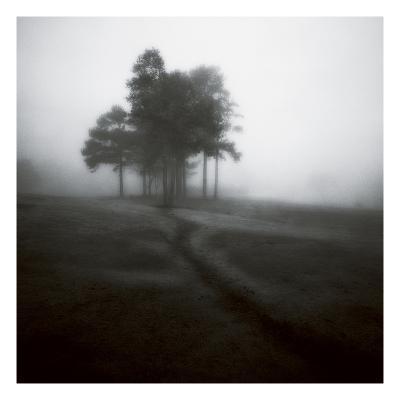 Fog Tree Study 1-Jamie Cook-Premium Photographic Print