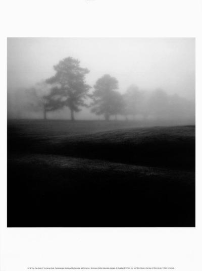 Fog Tree Study II-Jamie Cook-Art Print