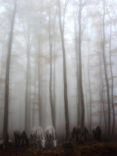 Fog-Francesco Martini-Photographic Print