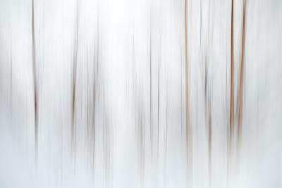 Fog-Ursula Abresch-Premium Photographic Print