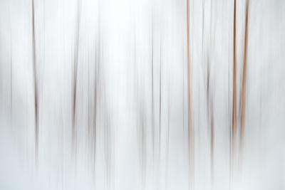 Fog-Ursula Abresch-Photographic Print