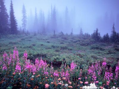 Foggy Alpine Meadow, Mt. Rainier National Park, Washington, USA-Janell Davidson-Photographic Print