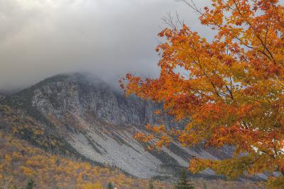 Foggy Autumn Design at White Mountain, New Hampshire-Vincent James-Photographic Print