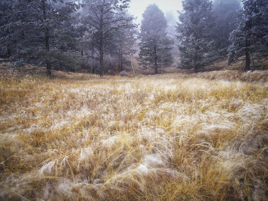 Foggy Forest with Meadow, Pike National Forest, Colorado-Keith Ladzinski-Photographic Print
