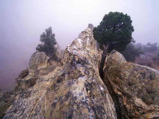 Foggy Morning at Garden of the Gods, Colorado-Keith Ladzinski-Photographic Print