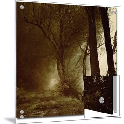 Foggy Path through Forest-Ewa Zauscinska-Art on Acrylic