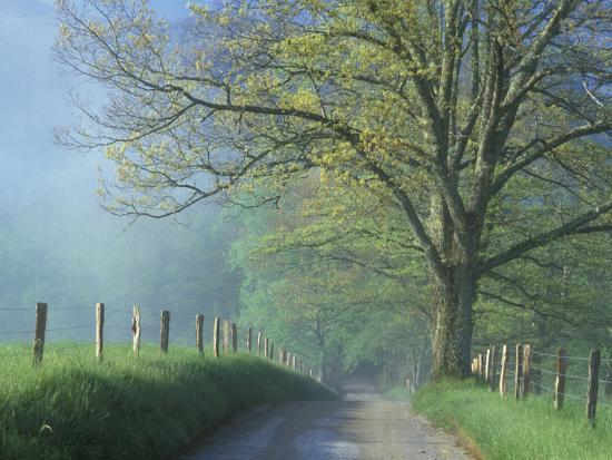 foggy road and oak cades cove great smoky mountains national park tennessee usa photographic. Black Bedroom Furniture Sets. Home Design Ideas