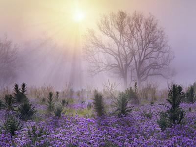 https://imgc.artprintimages.com/img/print/foggy-sunrise-south-llano-river-state-park-texas_u-l-q1bljk70.jpg?p=0