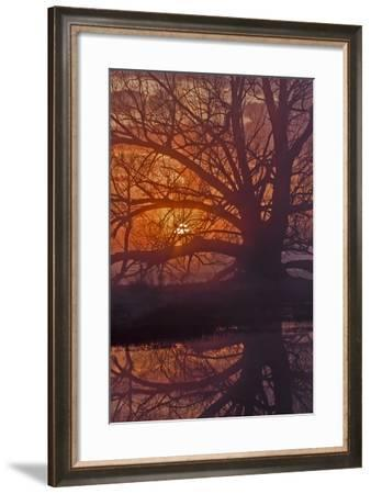 Foggy Sunrise-Larry McFerrin-Framed Photo