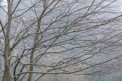 Foggy Winter II-Kathy Mahan-Photographic Print