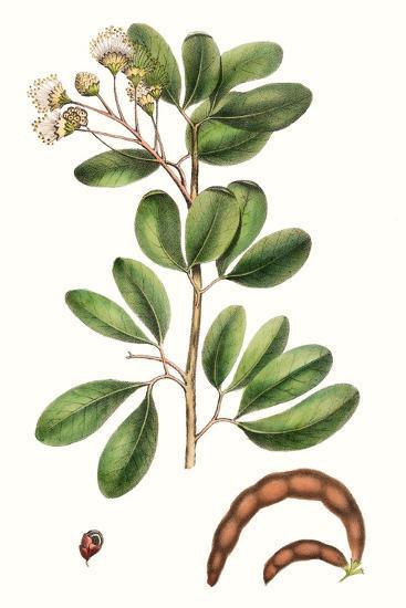 Foliage & Blooms III-Thomas Nuttall-Premium Giclee Print
