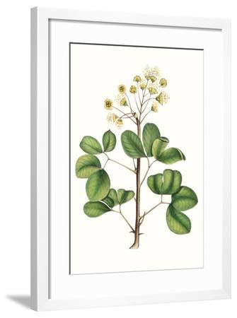 Foliage & Blooms IV-Thomas Nuttall-Framed Premium Giclee Print