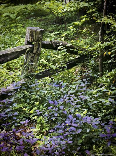 Foliage Covers a Wood Fence in Long Branch Nature Center-Rex Stucky-Photographic Print