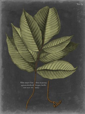 https://imgc.artprintimages.com/img/print/foliage-dramatique-iii_u-l-pyvs7a0.jpg?p=0