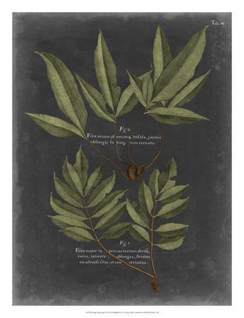 https://imgc.artprintimages.com/img/print/foliage-dramatique-iv_u-l-f8fa7z0.jpg?p=0