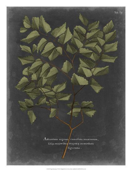 Foliage Dramatique V-Vision Studio-Giclee Print