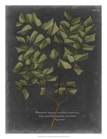 https://imgc.artprintimages.com/img/print/foliage-dramatique-v_u-l-f8fa800.jpg?p=0