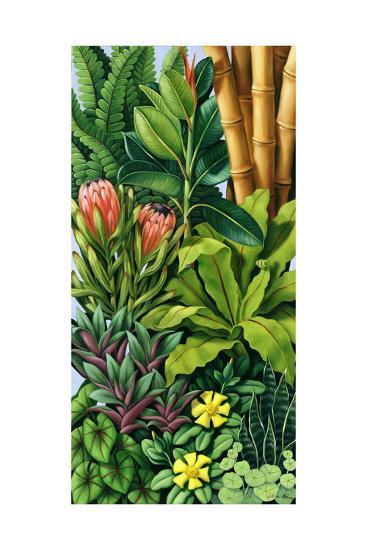 Foliage III, 2005-Catherine Abel-Giclee Print
