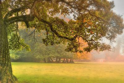 Foliage-Viviane Fedieu Daniel-Photographic Print