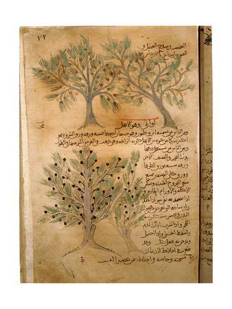 https://imgc.artprintimages.com/img/print/folio-22r-of-the-arabic-version-of-dioscorides-de-materia-medica_u-l-pm47s50.jpg?p=0