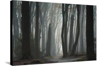 Follow Your Own Way-Ellen Borggreve-Stretched Canvas Print