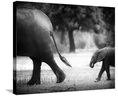 Following In Your Footsteps-Giovanni Casini-Stretched Canvas Print