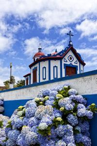 Hydrangea Flowers in Front of the Chapel on Top of Monte Santo at Agua De Pau, Sao Miguel Island, A by foodbytes