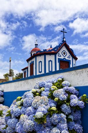 Hydrangea Flowers in Front of the Chapel on Top of Monte Santo at Agua De Pau, Sao Miguel Island, A