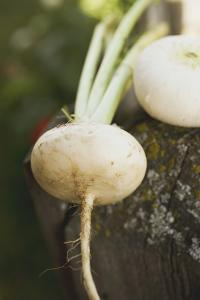 Turnips on Wood by Foodcollection