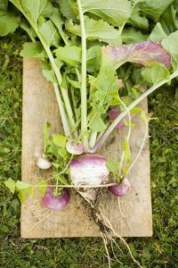 Turnips with Roots, Leaves and Soil by Foodcollection