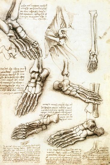 Foot Anatomy by Leonardo Da Vinci-Sheila Terry-Photographic Print