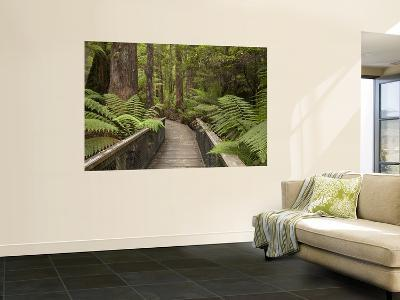 Footpath Through Forest To Newdegate Cave, Hastings Caves State Reserve, Tasmania, Australia-David Wall-Wall Mural
