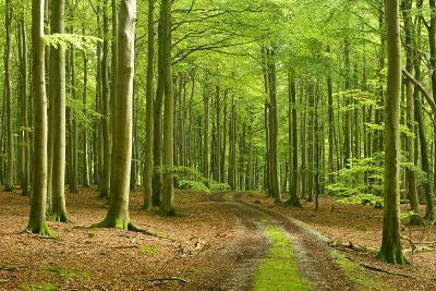 Footpath Through Near-Natural Beech Forest, Stubnitz, Island R?gen-Andreas Vitting-Photographic Print