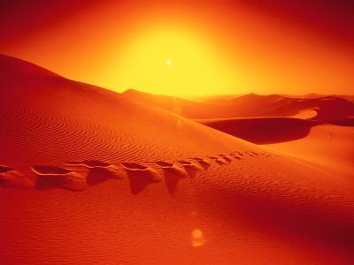 Footprints in desert-Frank Krahmer-Photographic Print