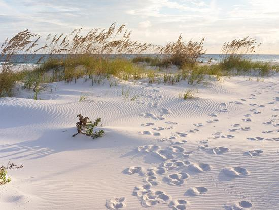 Footprints in the Sand at Sunset in the Dunes of Pensacola Beach, Florida.-forestpath-Photographic Print