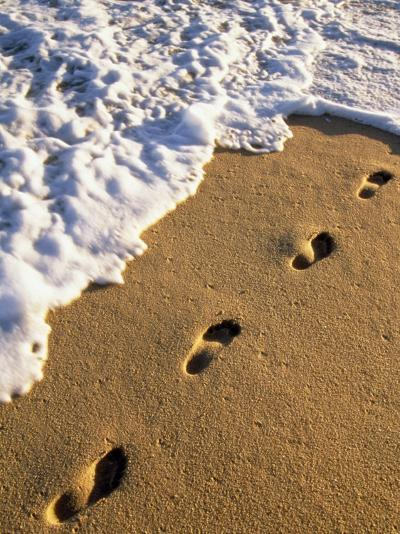 Footprints in the Sand, Near the Water's Edge-Michael Melford-Photographic Print