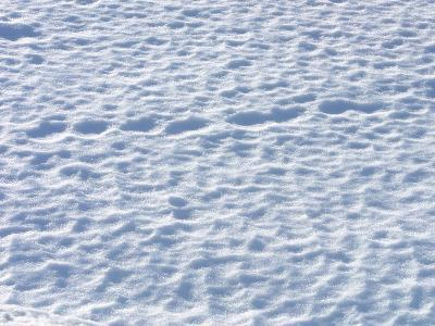 Footprints in the Snow--Photographic Print