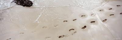 Footprints on the Beach, Railay Beach, Krabi, Thailand--Photographic Print