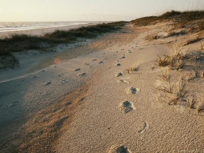 Footprints on the Beach-Walter Meayers Edwards-Photographic Print