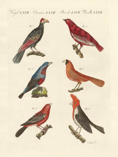 Foreign Beautiful Birds--Giclee Print