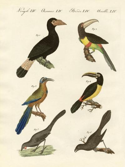 Foreign Birds--Giclee Print