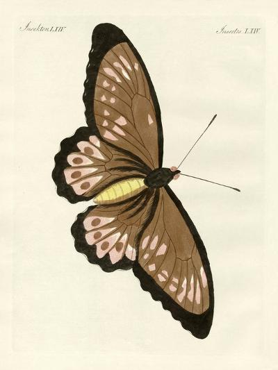 Foreign Butterflies of a Phenomenal Size--Giclee Print