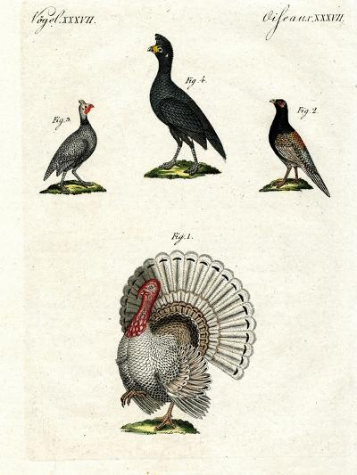 Foreign Domestic Poultry--Giclee Print